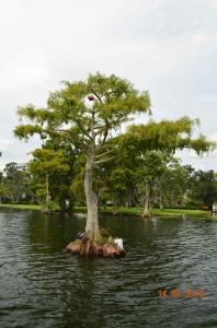 Plan d'eau de Floride