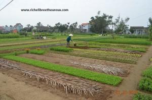 La vie est un champs. Le cultiver et le développer est de notre devoir.
