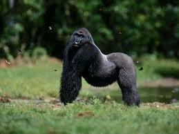 primate et comportement humain