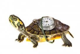 tortue et temps